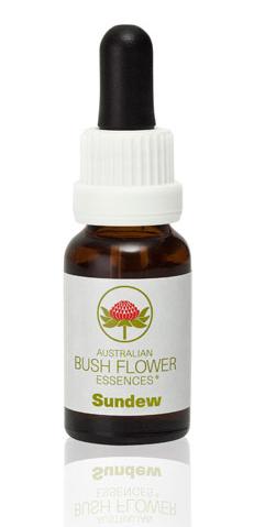 Bush Flower Sundew